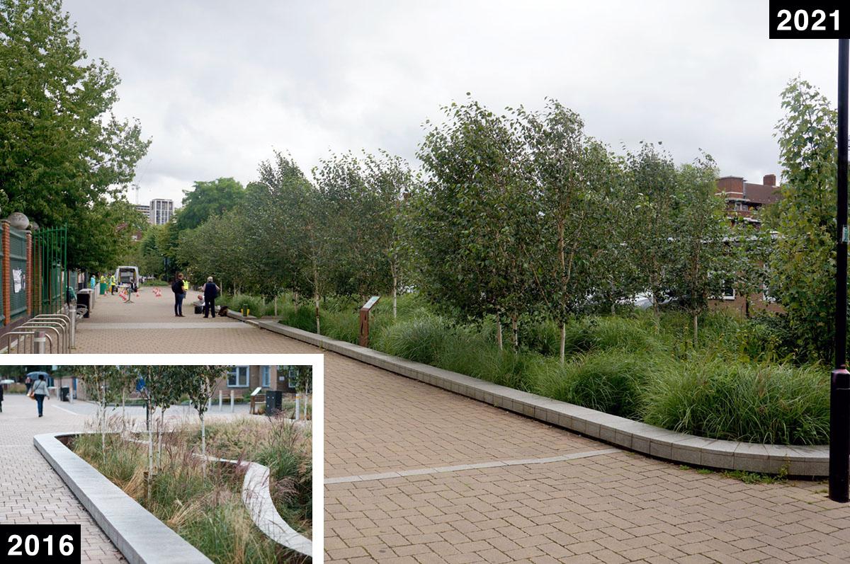 tree growth comparison